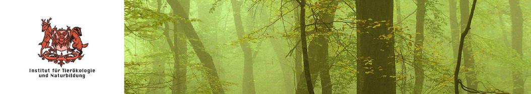 Wald-Wiese-Sonstiges | Institut für Tierökologie und Naturbildung