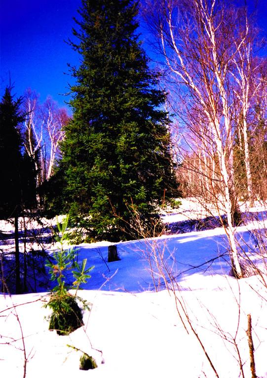 Paysage hivernal, plaines enneigées, Canada