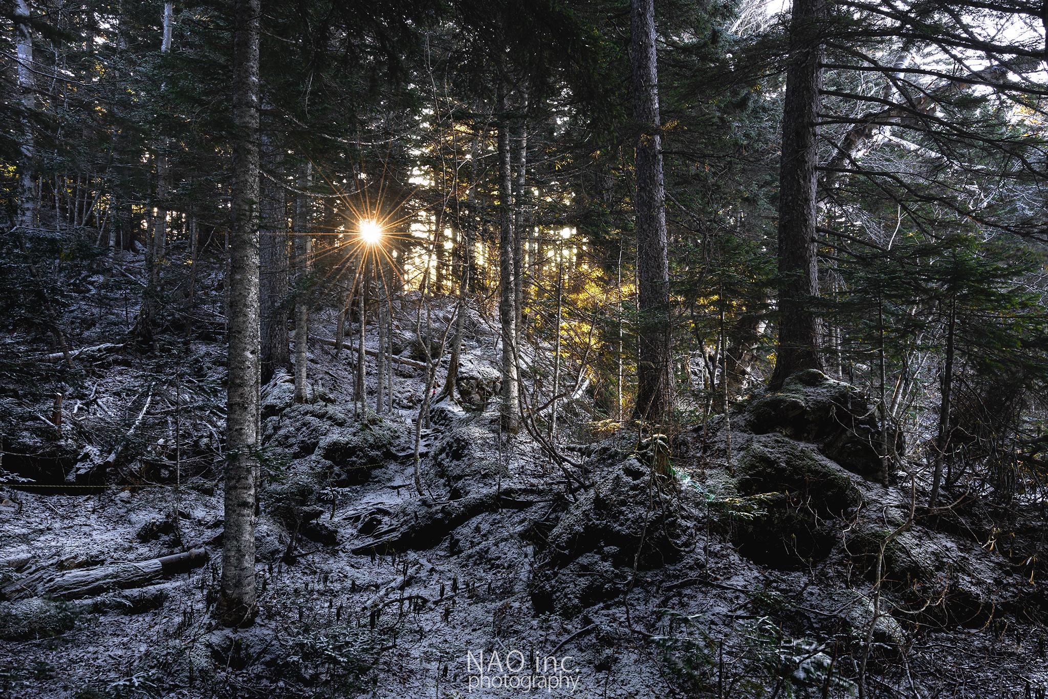 オンネトーの森に射す陽