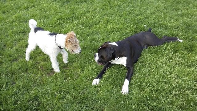 Cooper mit Franzel
