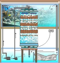 Rieselfilter für große Becken auch Seewasserbecken
