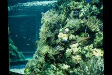 Seewasseraquarium 20000 Liter Großaquarium
