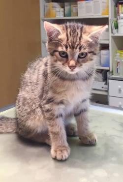 Was Tun Wenn Katzen Durchfall Haben Tierärztin Galina Roth