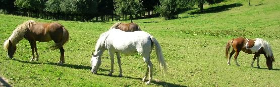 Vergiftung bei Pferden