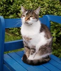 Unser Katzenberater