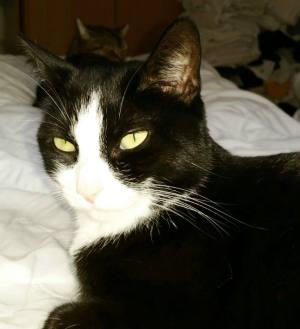 Katzen Homöopathie