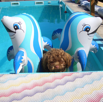 ... schwimmen ist cool ... 11 Mo