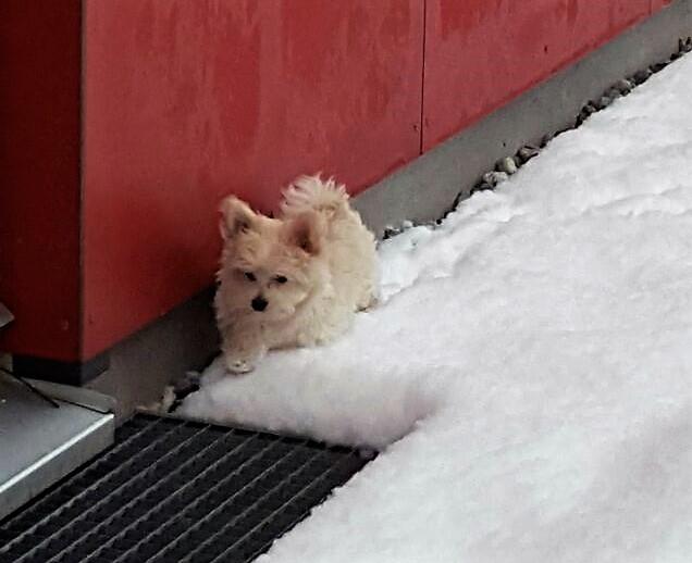 ... ganz schön nass, dieser Schnee ... 3,5M