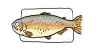 黒木キャンプ場【特別限定企画】魚の摑み取り値下げしました!