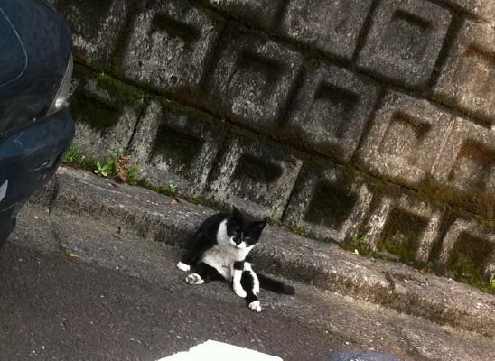 がんとばす猫