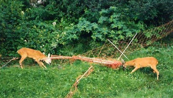 Bild: Amt für Jagd und Fischerei