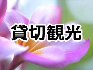 ハワイオアフ島での貸切タクシー・チャーター観光のページへのリンク ピンクのプルメリアの花