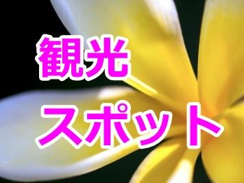 ハワイオアフ島の観光スポットご紹介ページへのリンク 黄色い美しいプルメリアの花のズーム写真