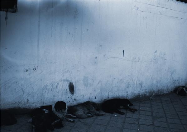 地蔵建立—ラサ(犬)[中国] Jizoing: Lhasa (Dogs) [China], 1993