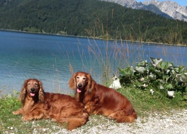 Mozart und Kamillo am Eibsee