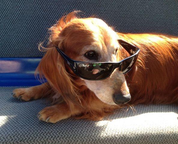 cool mit Brille