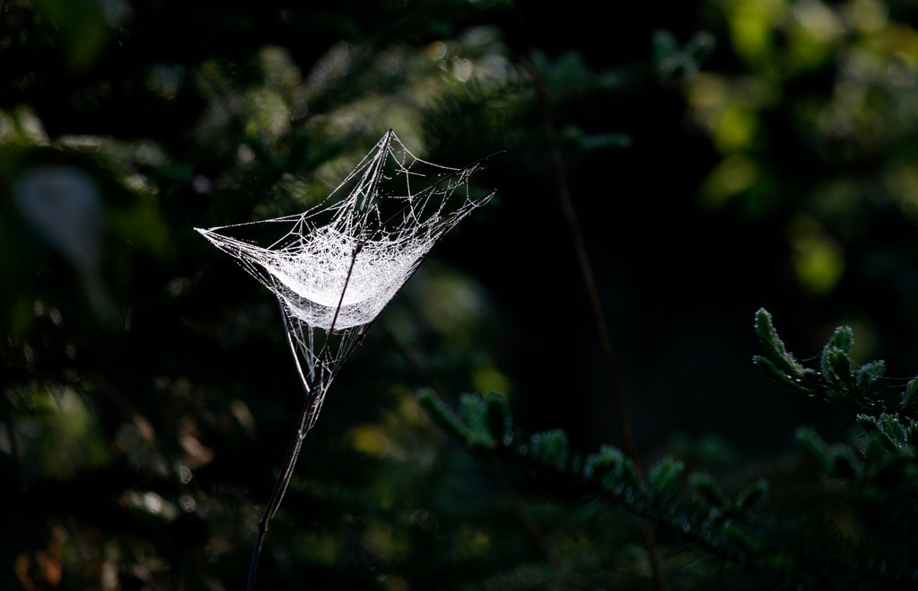 Spider Web. Minnesota