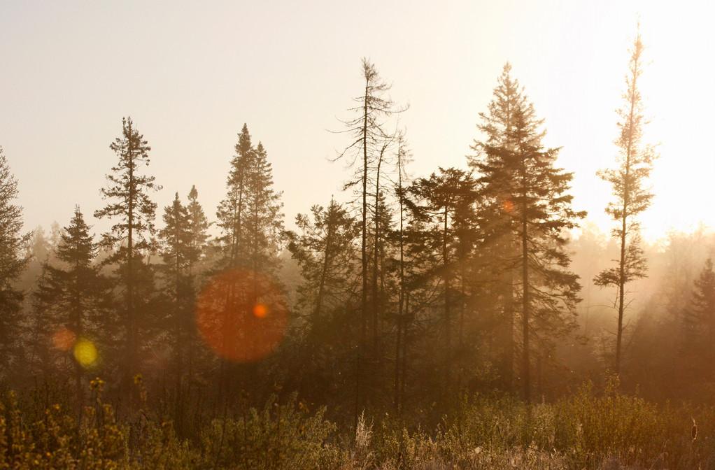 Sunrise in the bog. Minnesota