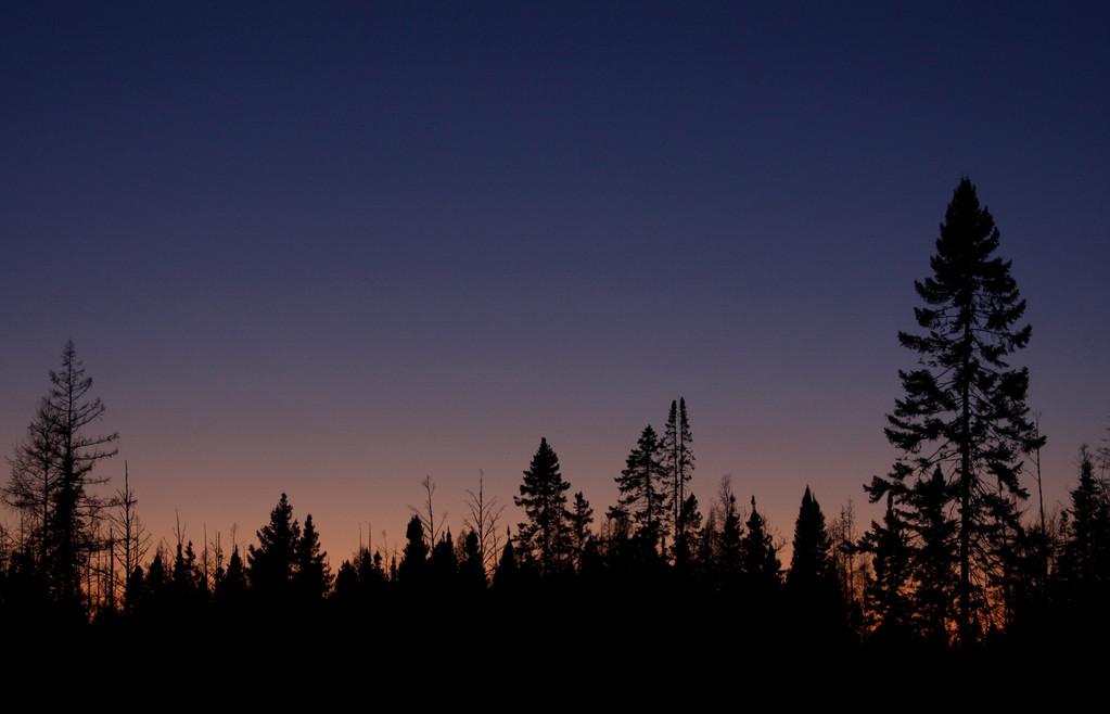 Sunset in the bog. Minnesota