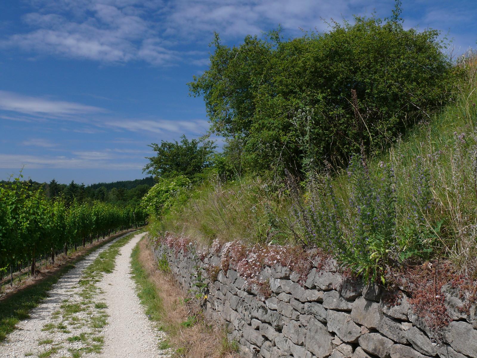 Trockenmauern am Hohentwiel - Foto: NABU/H. Werner