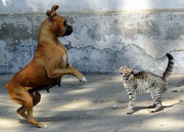 (c) https://jaimelesmots.com/etre-comme-chien-et-chat-sentendre-comme-chien-et-chat
