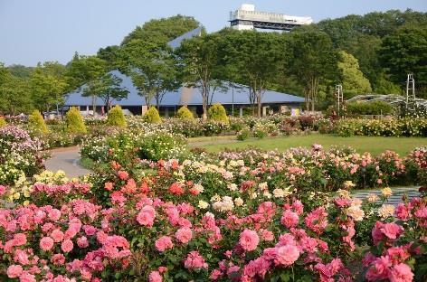 花フェスタ記念公園  春と秋にはバラ の香りに包まれながら園内を楽しめま す。