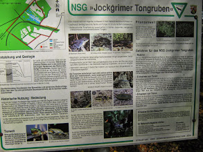 an den Jockgrimer Tongruben
