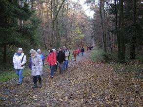 November 2014 auf dem Waldenserpfad bei Mörfelden