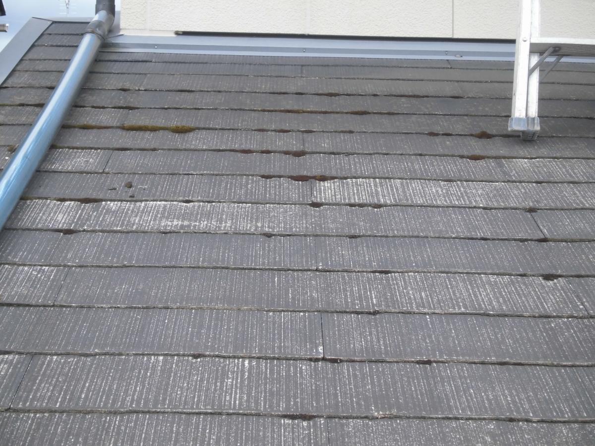 施工前 コケが水を吸って屋根の下に水がまわります