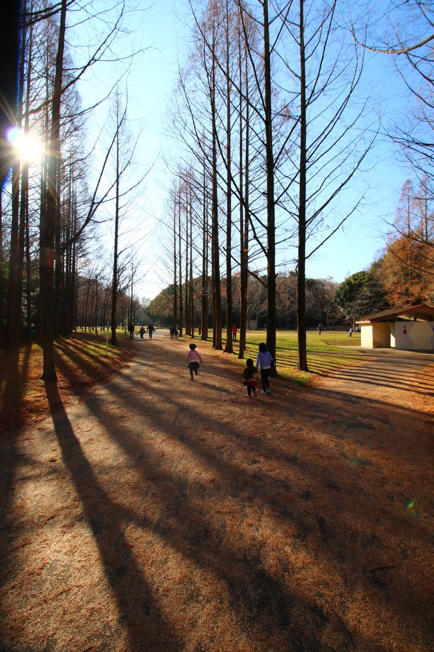 いつもの新檜尾台公園への散歩から、新年は始まりました。