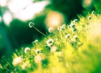 Kräuter und andere Pflanzen