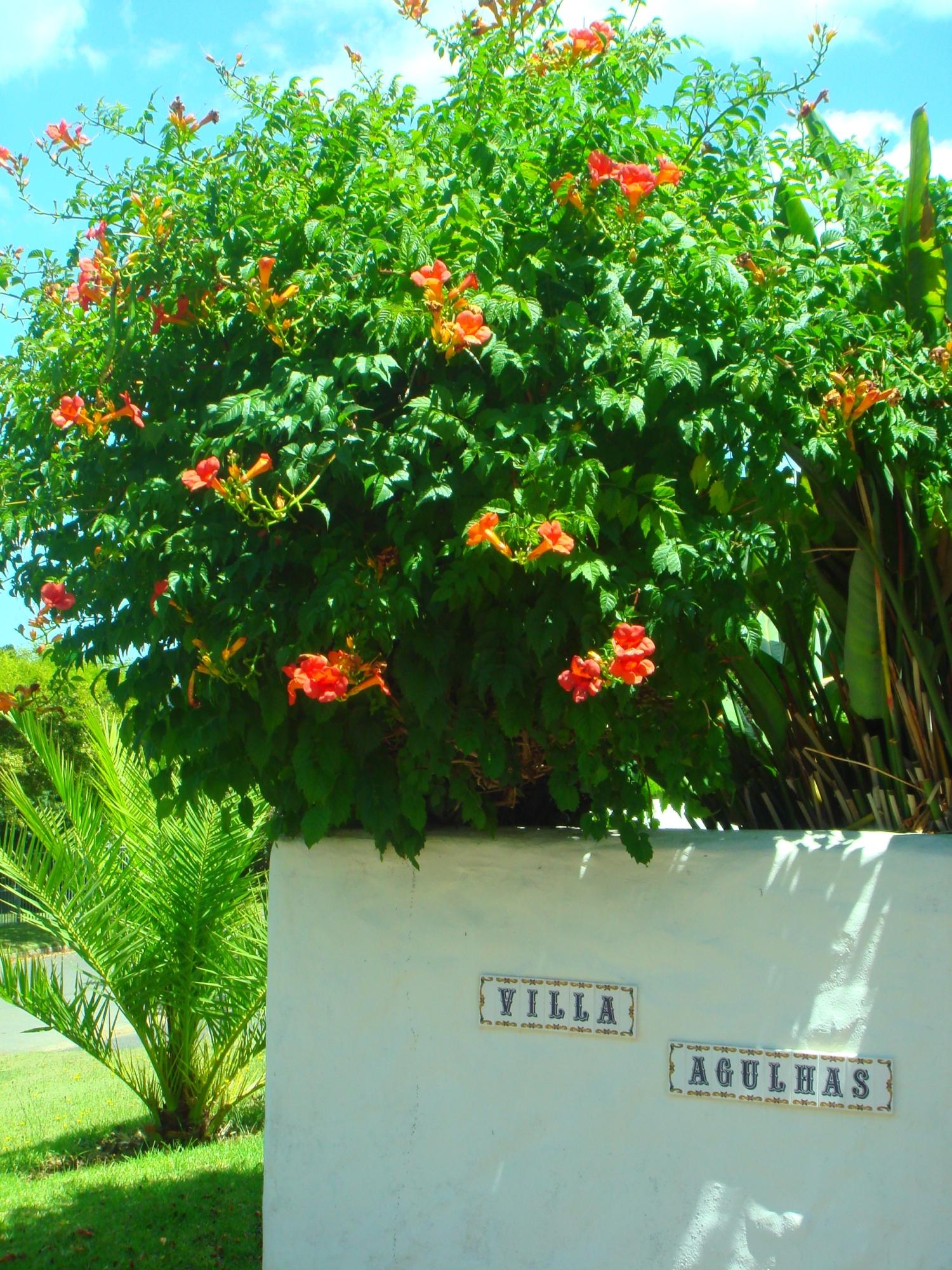 Villa Agulhas Stellenbosch