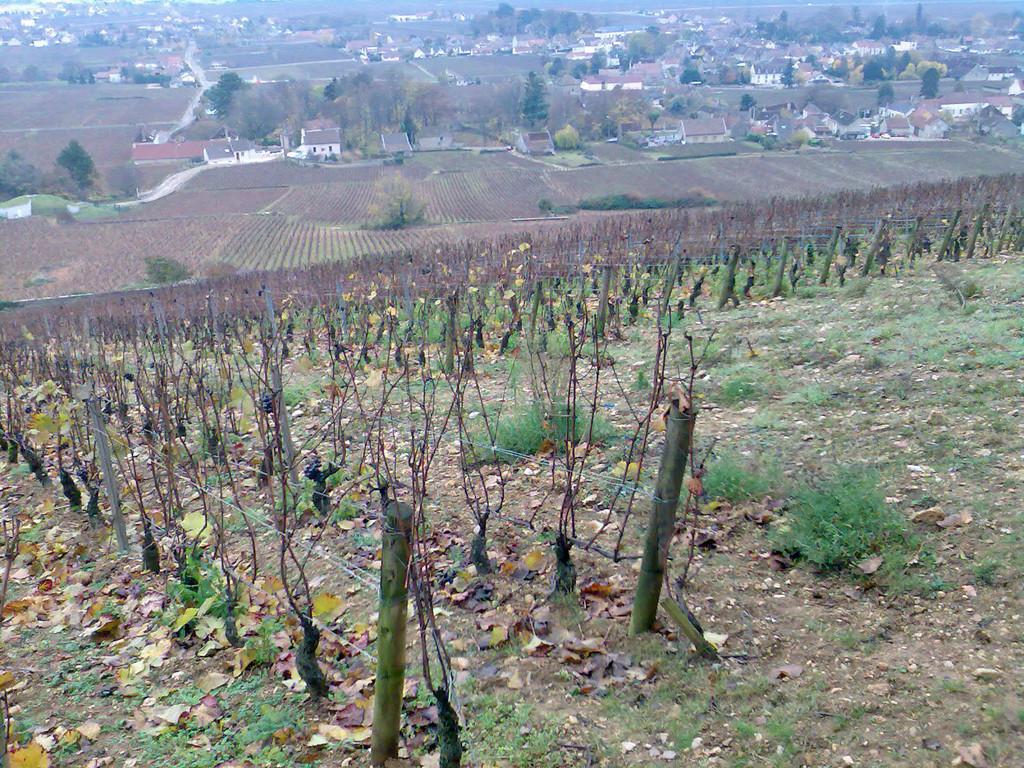"""Sol en haut du lieu-dit """"Les Cazetiers"""" - Village de Gevrey en contre-bas"""