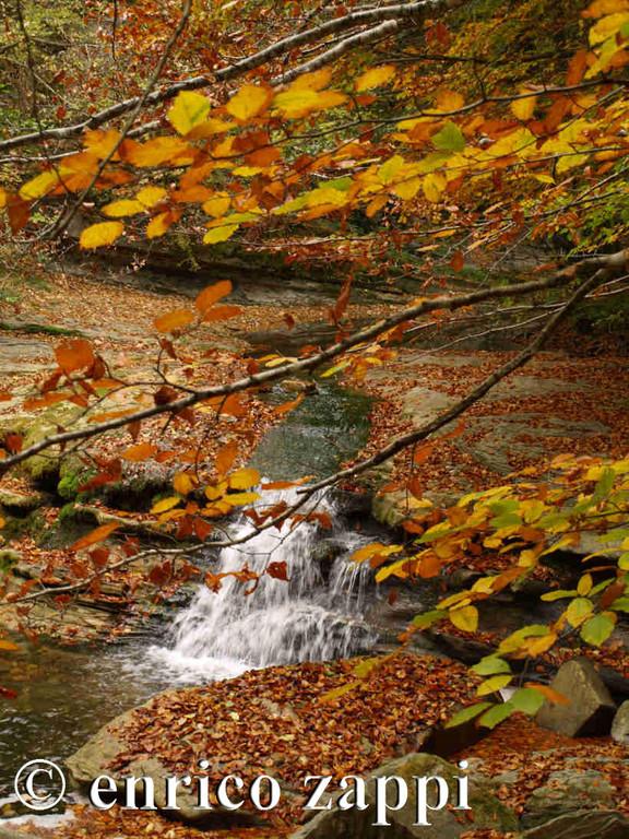 Scorre il ruscello dell'Acquacheta fra le dorate foglie dei faggi