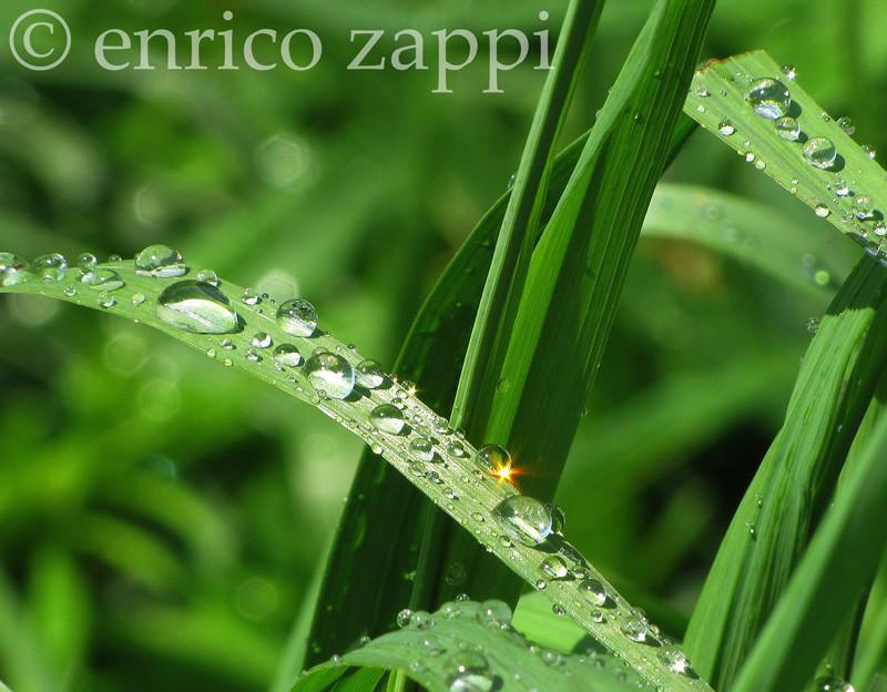 Gocce di pioggia, pietre preziose per la terra, scintillano sui fili d'erba sotto i raggi del sole:Valle d'Aosta: località Cervinia dopo un temporale estivo