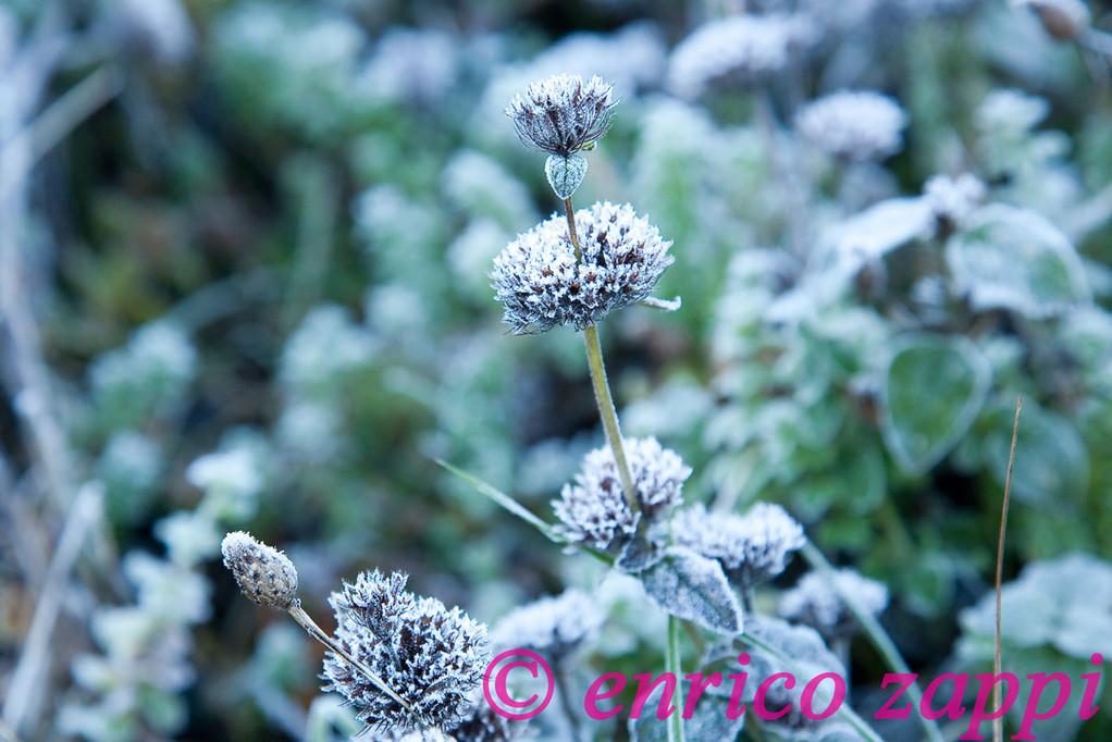 Brina incastona di piccoli cristalli la vegetazione