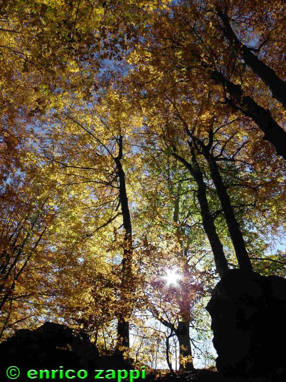 Raggi di sole brillano fra le foglie dorate dei faggi