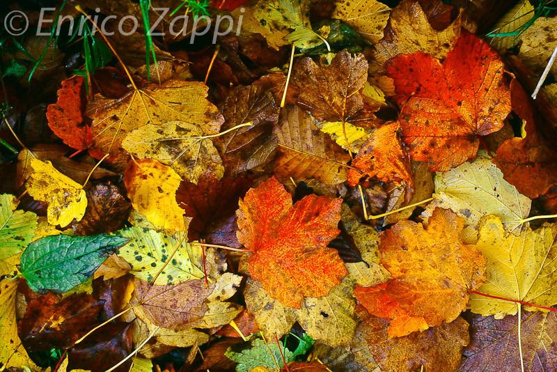 Accumulo di foglie dopo un forte temporale d'autunno