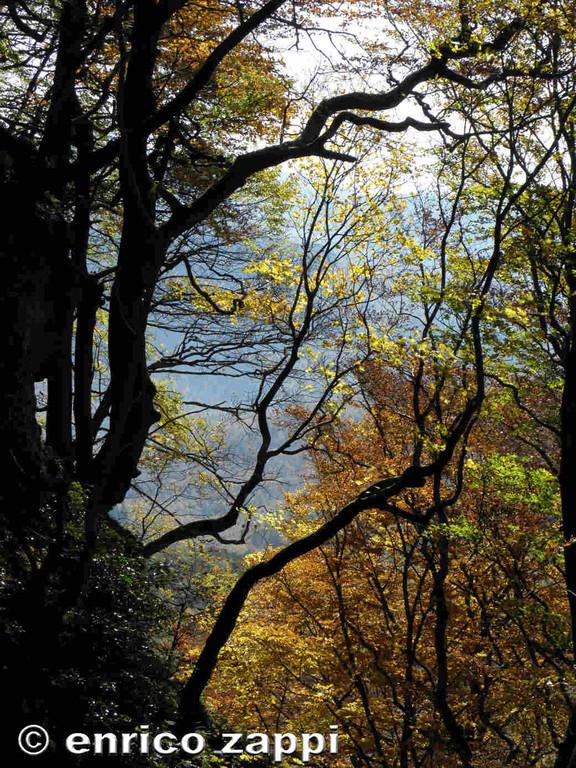 Abarbicati sulle irte pendici appenniniche nel fascino di un'atmosfera d'autunno