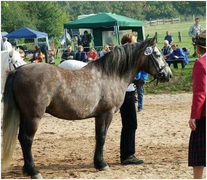 Kilnacasan Rannoch, Breedshow 2006 3. Platz Wallache 4 Jahre und älter, über 142 cm