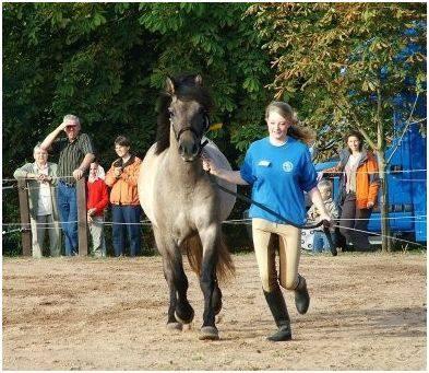 Kilnacasan Reiving Scotsman Breedshow 2006 1. Platz 2-jährige