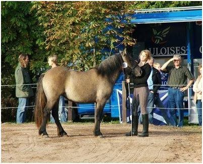 Kilnacasan Felicity, Breedshow 2006 2.Platz Jährlinge