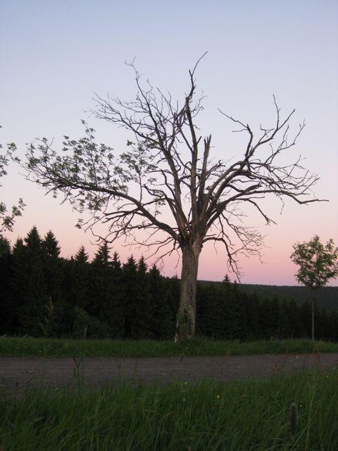 Abendstimmung in Heubach (Masserberg)
