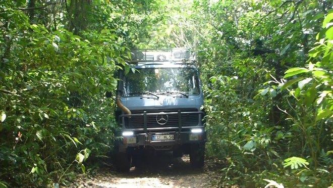 MOMO struggles himself thru the jungle
