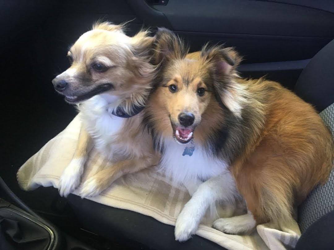 Bandit mit seinem Freund Milo🐕🐕🐾🐾❤