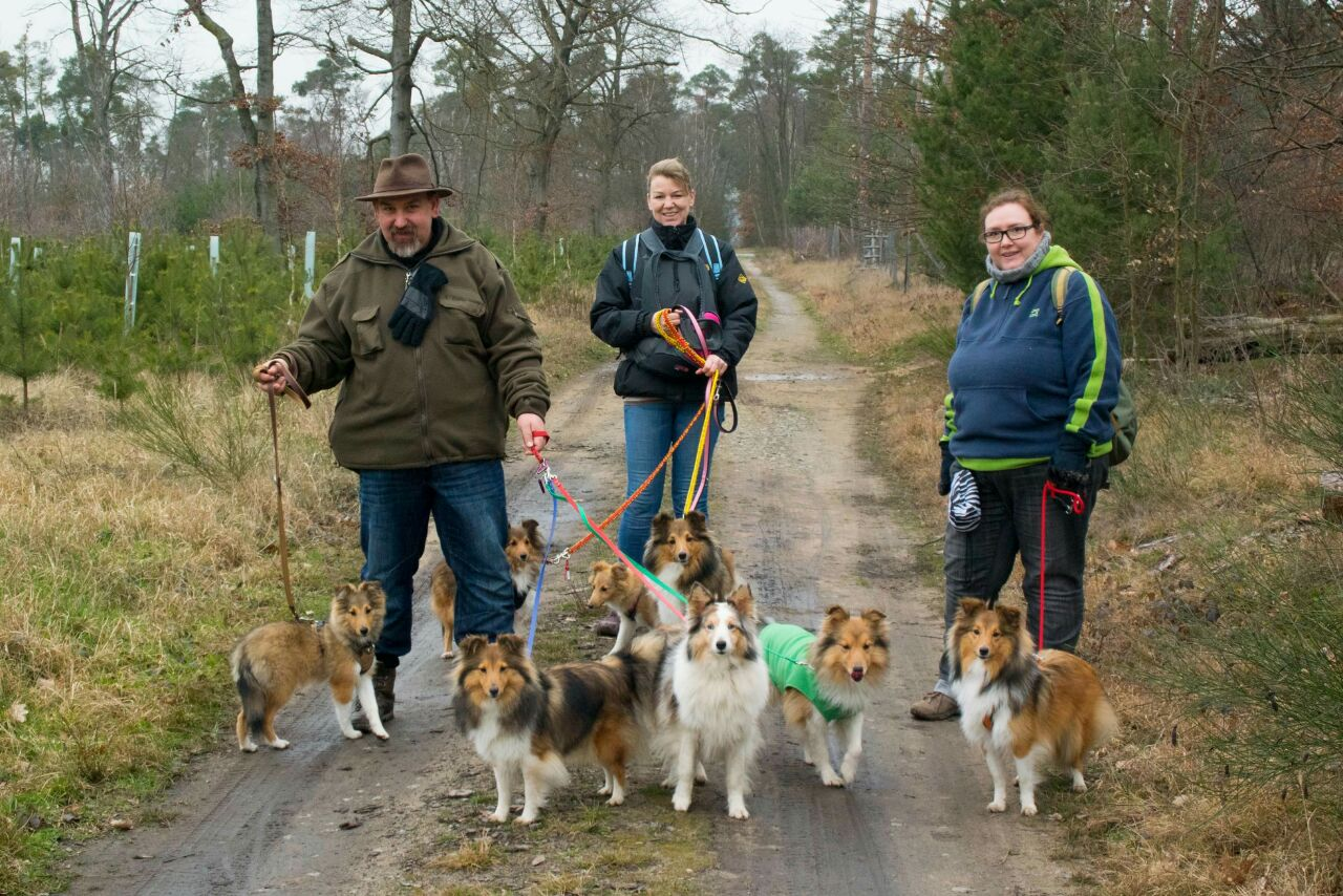 Schöner Spaziergang mit Freunden welche zwei Hunde von uns haben Ayla und Bentley und einer Freundin mit ihren drei  Shelties.