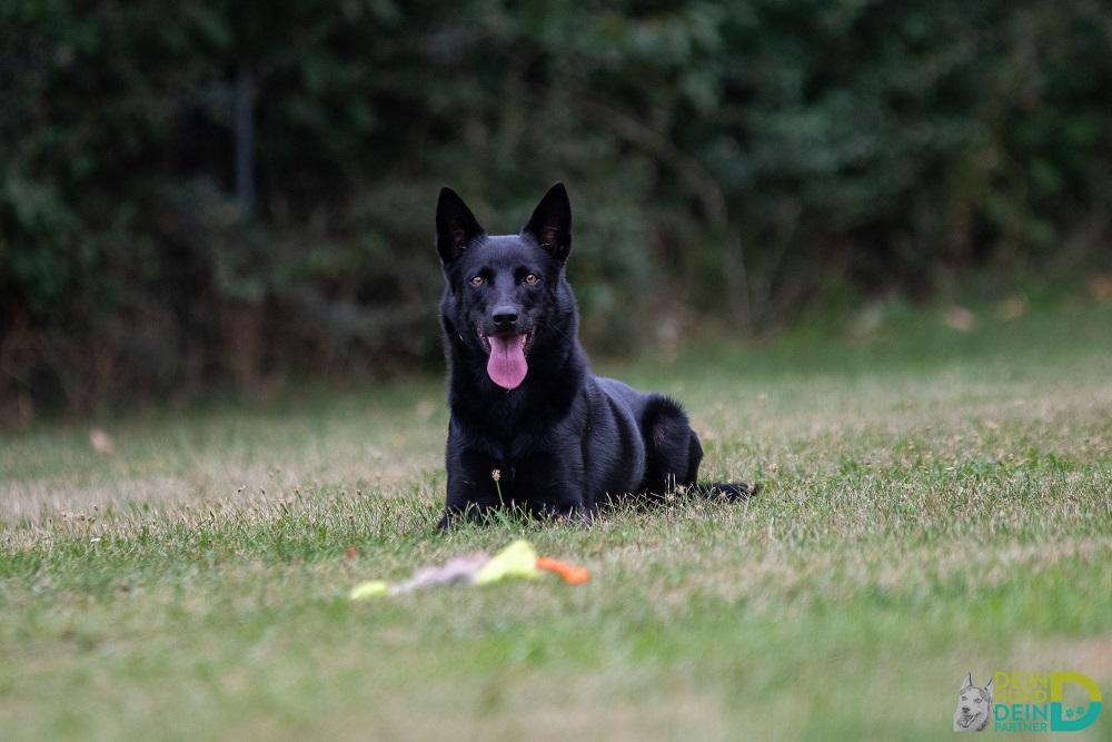 Dein Hund Dein Partner stellt sich vor - Wolkersdorfer Regionsjournal 03/2020