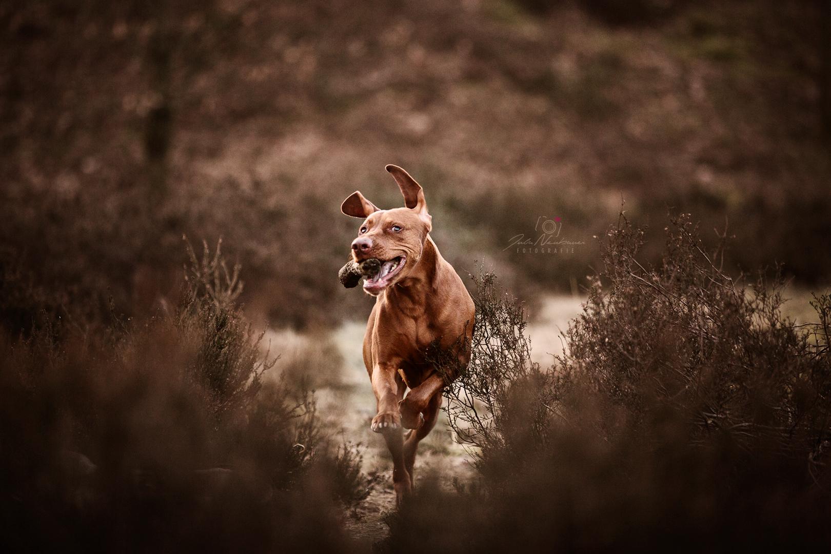 schönere Hundefotos_Hund motivieren für Fotos