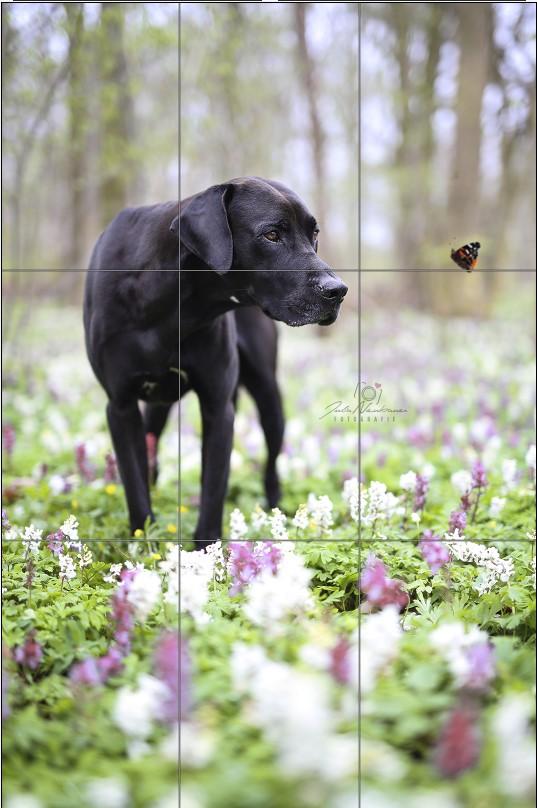 Bildaufbau_Drittelregel_Bidschnitt_Tipps_Hundefotos_Hundefotografie