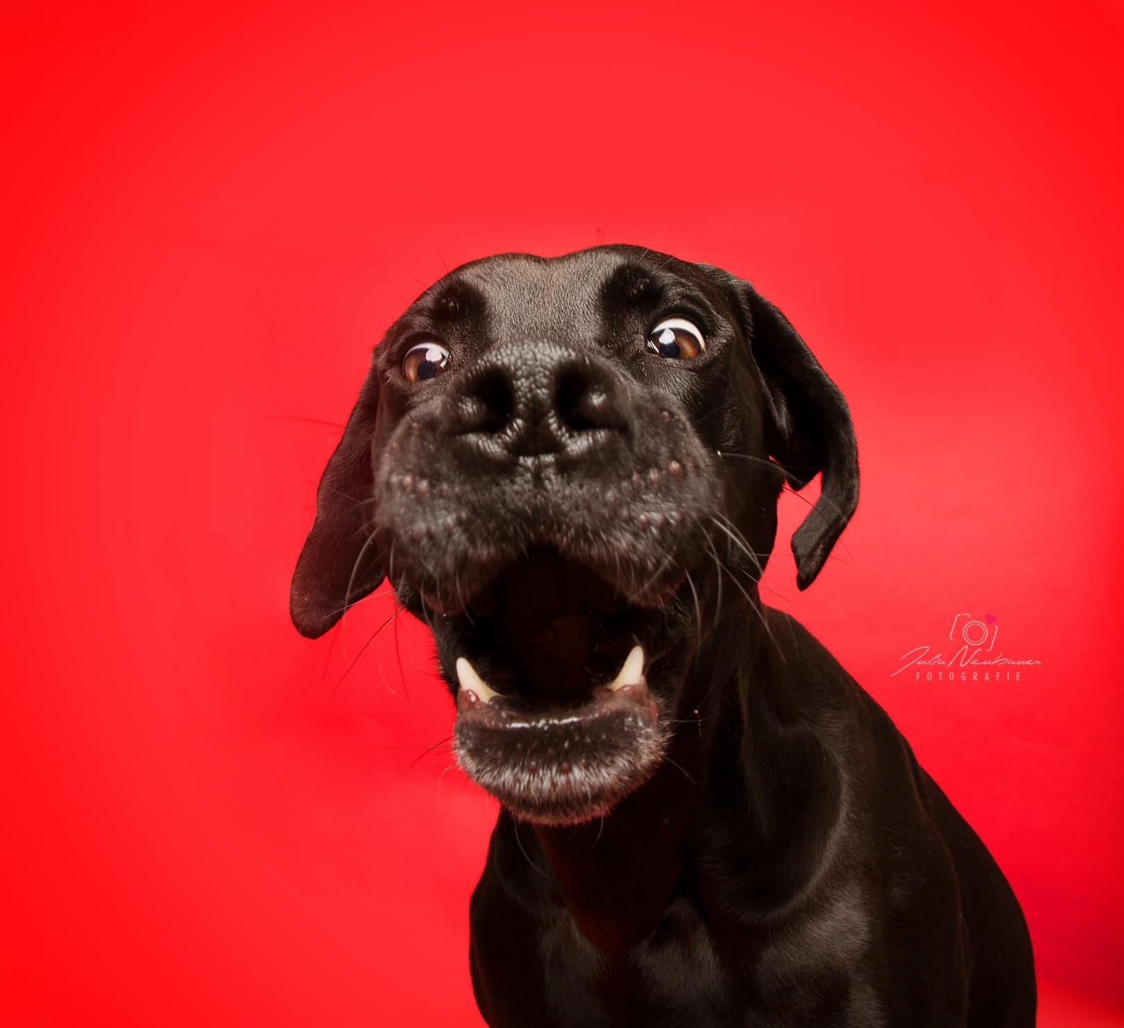 was ist wichtig bei Hundefotos_Belohnung_Spaß beim Shooting